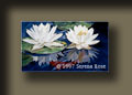Spring Water lilies by Serena Rose, two large white water lilies.